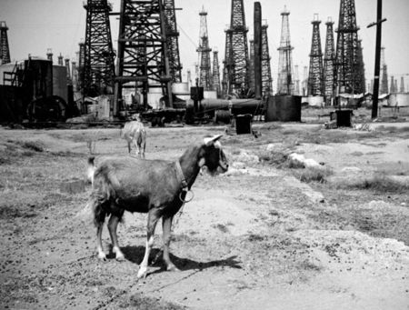 Huntington Beach Oil Field 1930s Herman Schultheis