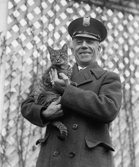 White house cat Tiger 1924 2
