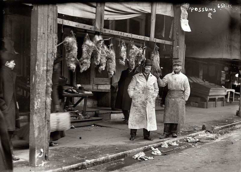 Oppossums New York 1916