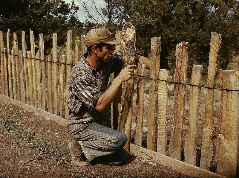 Jack Whinery, homesteader, repairing fence which he built with slabs, Pie Town, New Mexico russell lee 1940