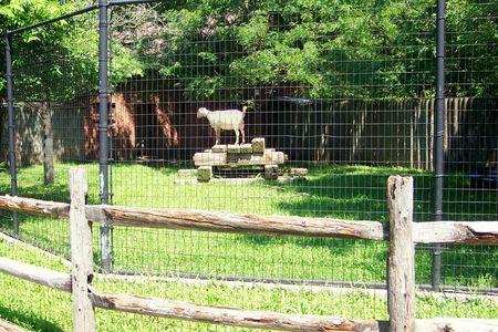 Indian Boundary Park zoo