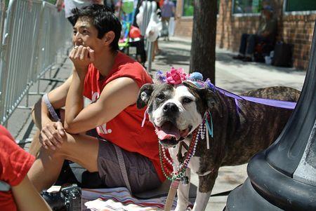 Dogs Pride Parade Chicago 2014