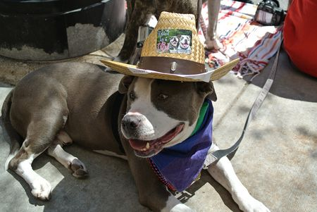 Pride Parade Chicago 2014 dogs