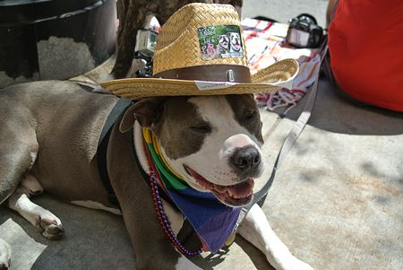 Pride Parade 2014 Dog photos