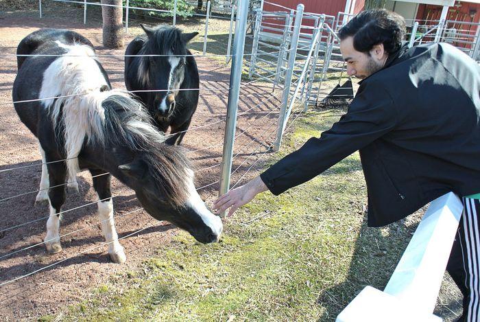 Pony Petter