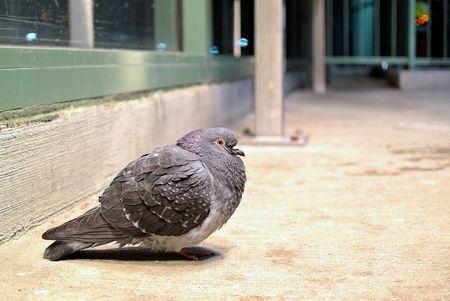Pigeon under a heat lamp at a CTA L Train Station