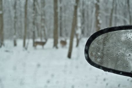 Drive-by shooting, deer during a spring snow storm