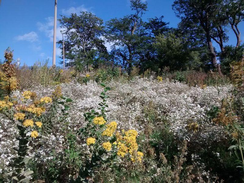 Autumn lincoln park 2