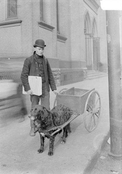 Blind_newsboy_chicago_1902