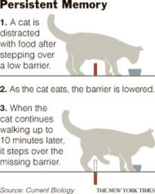 Cat_barrier_2