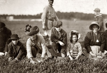 Cranberry_pickers_4