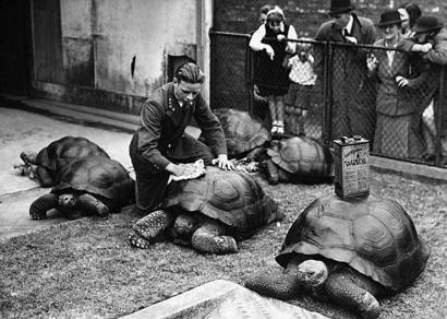 London_zoo_turtle_wax