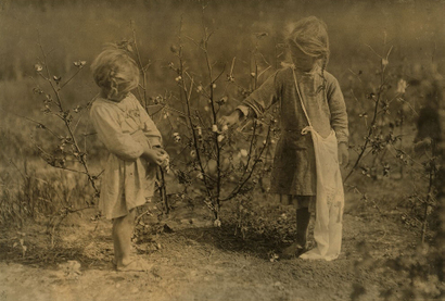 4_and_5_year_old_picking_cotton