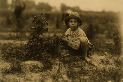 Picking_berries_near_baltimore_md_2