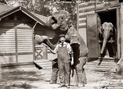 Elephant_house_in_central_park_ny_2